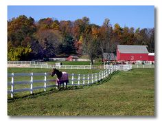 a pic from my hometown in horse country, Northwestern New Jersey  http://www.fieldstonehilldesign.com/2012/01/pinspiration-equestrian.html