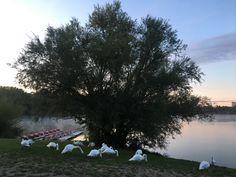 Skoré ráno keď sa ludia ešte len zobudzajú,tak labute si nerušene raňajkujú. 🙂  Fotku nám poslal Martin. Parádna fotka. Ďakujeme. 😍😍 Relax, Country Roads