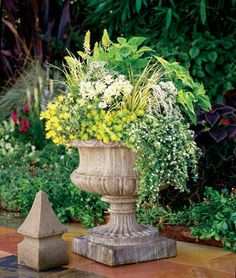 Proven Winners Festival Star Hardy Baby's Breath (Gypsophila) Live Plant, White Flowers, - The Home Depot Sanibel Island, Container Plants, Container Gardening, Flower Containers, Fall Containers, Vegetable Gardening, Short Plants, Proven Winners, Colorful Plants