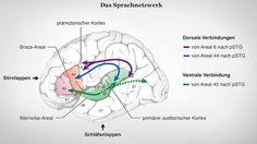 Das Sprachnetzwerk