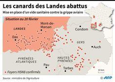 #Grippe aviaire: bientôt plus un seul canard d'élevage dans les Landes - lalibre.be: lalibre.be Grippe aviaire: bientôt plus un seul canard…