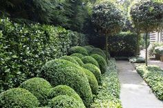 buxus - referred to also as box or boxwood.  Some cultivars are subject to some leaf bronzing in the winter.  There are varieties that don't do this.