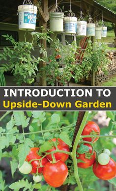 Upside down gardening is growing plants in pots suspended from the ceiling. Growing Plants, Growing Vegetables, Container Gardening, Gardening Tips, Vegetable Gardening, Garden Definition, Raised Garden Planters, Herb Garden, Garden Landscape Design