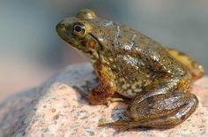 Kurbağa Bacağı'nda İhracat 7,2 Milyon Liraya Ulaştı - http://eborsahaber.com/haberler/kurbaga-bacaginda-ihracat-72-milyon-liraya-ulasti/