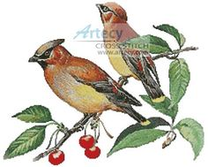 Cedar Wax Wing Cross Stitch Pattern http://www.artecyshop.com/index.php?main_page=product_info&cPath=1_4&products_id=171
