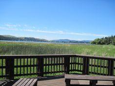 Reedy view across Liberty Lake, WA