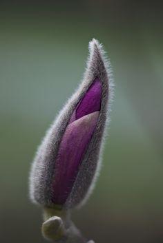 ** Purple & grey