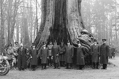 If this site changes one persons mind as to why the Hollow Tree is of Historical significance to the history of early Vancouver, then this website will be a success.  Many of the photos are from the Vancouver Archives website which has many pictures available online. Check their site out here http://vancouver.ca/ctyclerk/archives