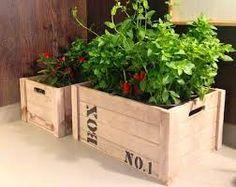 Resultado de imagem para horta no caixote