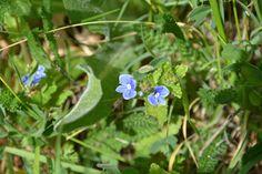 """Flowers """"folovers"""". Create, Flowers, Plants, Photography, Photograph, Photography Business, Flora, Photoshoot, Fotografie"""