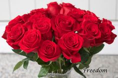 Freedom-Red-Rose