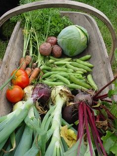 Preserving the Harvest - What to do with all that you grew in your garden