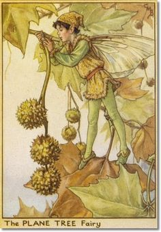 Cicely Mary Barker - Flower Fairies of the Winter - The Plane Tree Fairy Painting