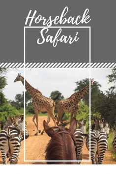 Why is a horseback safari in Africa better than a 'regular' one? Find out the answer in our blog post #safari #riding #horseback