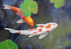 How to Build a Koi Fish Pond. Koi are beautiful, ornamental fish that can live for a long time in the right conditions. Building your own koi fish pond in your garden can sound like a difficult task, however, with a bit of planning and. Coy Fish, Koi Fish Pond, Koi Art, Fish Art, Painting Lessons, Art Lessons, Koi Painting, Online Art Classes, Guache