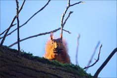 Eichhörnchen mit Nuss - Jahreszeiten - Galerie - Community
