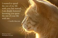 """Wow - this is SO true! - NEW book from Marianne Soucy, founder of Healing Pet Loss: """"From Grief to Gratitude after Pet Loss - Healing Messages and Guidance from Pets in the Afterlife"""" Crazy Cat Lady, Crazy Cats, I Love Cats, Cute Cats, Animals And Pets, Cute Animals, Pet Loss Grief, Loss Of Pet, Pet Remembrance"""