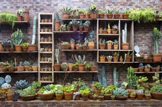 Display a collection of cacti and succulents.
