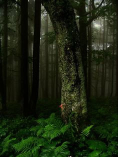 Ferns in forest. There are places on earth that are so beautiful that it takes your breath away. Nature is my solace.