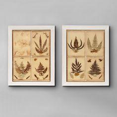 Framed Groups of Pressed Ferns C 1880 England