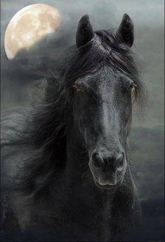 Black Horse - Moonlight Run