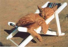 zonnig katje!