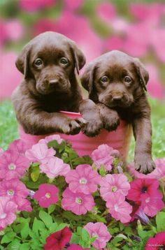 Cachorros :3