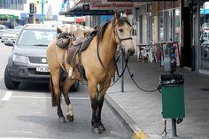 Horse parking.