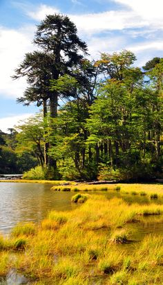 A sunny day in Huerquehue National Park - Chile
