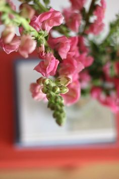 snapdragon flower, s