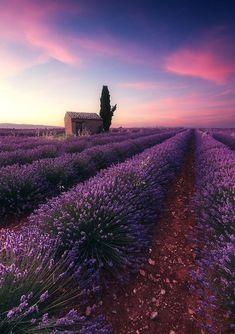 B U T T E R F L Y #LavenderFields