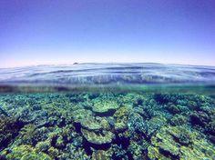 #corals #greatbarrierreef #coralreef #pacific #australia #cairns #snorkeling #underwater #gopro #downunder by mrmonk95 http://ift.tt/1UokkV2