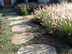 Dymondia, flagstones and Pennisetum grass.