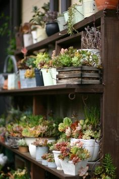 """""""Little Yard"""" Japanese blog (via Apartment Therapy / The Gardenist)"""