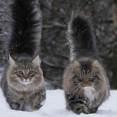 Wow the tails:)💗💕 such beauties 💗💗