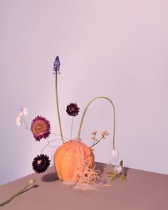 Oh, what a freaky lil'fellow. Still Life, Flower Arrangements, Objects, Bloom, Abstract, Plants, Conception, Colour Palettes, Inspiration