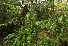 New Zealand Native Bush. Treks of New Zealand native bush in Tongariro National ,