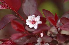 Floral, Flowers, Plants, Plant, Royal Icing Flowers, Flower, Flower, Florals, Planets