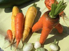 Karotten aus dem eigenen Gemüsegarten. #edgarten #gartenblog #karotten Carrots, Vegetables, Food, Carrot, Vegetable Recipes, Eten, Veggie Food, Meals, Veggies