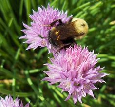 Bee Balm Exotic Flowers, Tropical Flowers, Fresh Flowers, Wild Flowers, Sensory Garden, Seasonal Flowers, Flowers Perennials, Lady Bug, Pink And Green
