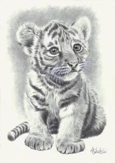 Image result for tiger sketches pencil