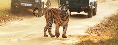 Indian Wildlife Holidays