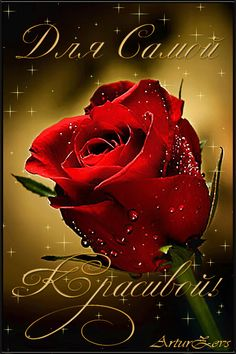 Автор плейкаста: Zevss. Тема: Женщины. Когда: 05.03.2015. Animated Heart, Best Urdu Poetry Images, Rose Images, Happy B Day, Happy Birthday Wishes, True Friends, My Flower, Positive Thoughts, Red Roses