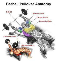 Multimedia Portal with Bodybuilding & Fitness Motivation + Inspiration Shoulder Training, Shoulder Workout, Chest Workouts, Gym Workouts, 100 Workout, Simple Workouts, Chest Exercises, Weight Exercises, Nutrition Sportive