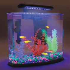 GloFish Shangri-La that uses blue light and specialty plants, gravel to enhance shine and color of fluorescent fish.