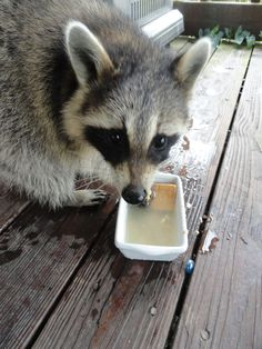 Dipping some crackers in water for a great snack :)