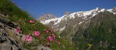Fuerenalp Engelberg flowers Engelberg, Mount Everest, Walking, Mountains, Nature, Flowers, Summer, Travel, Alps