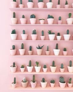 Our Plant Goals for 2019! - Dalla Vita - Pink Cacti Wall