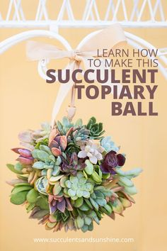 I love this succulent topiary ball! Such a fun item to decorate with! I love this succulent topiary ball! Such a fun item to decorate with! How To Water Succulents, Types Of Succulents, Propagating Succulents, Growing Succulents, Succulent Gardening, Planting Succulents, Succulent Ideas, Succulent Plants, Flowering Succulents