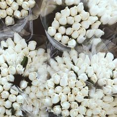 white + flowers